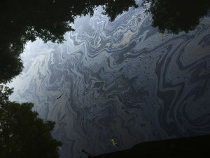The oil now covers the banks of the river for over 80 miles